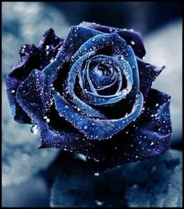 rosa blu.